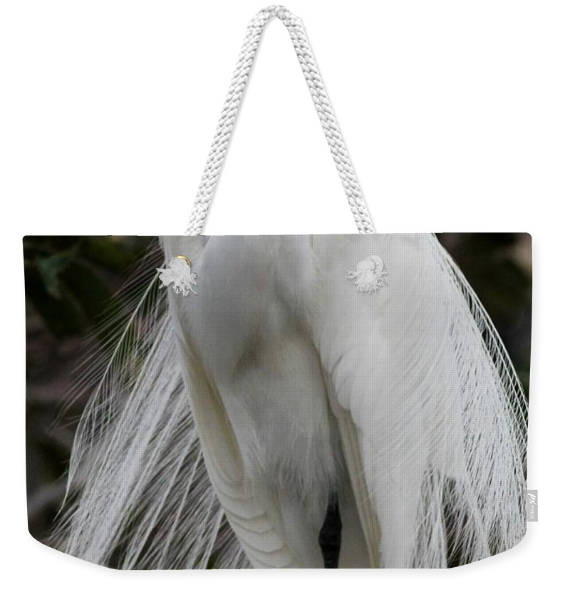 Bird Weekender Tote Bag featuring the photograph Great White Egret Windblown by Sabrina L Ryan