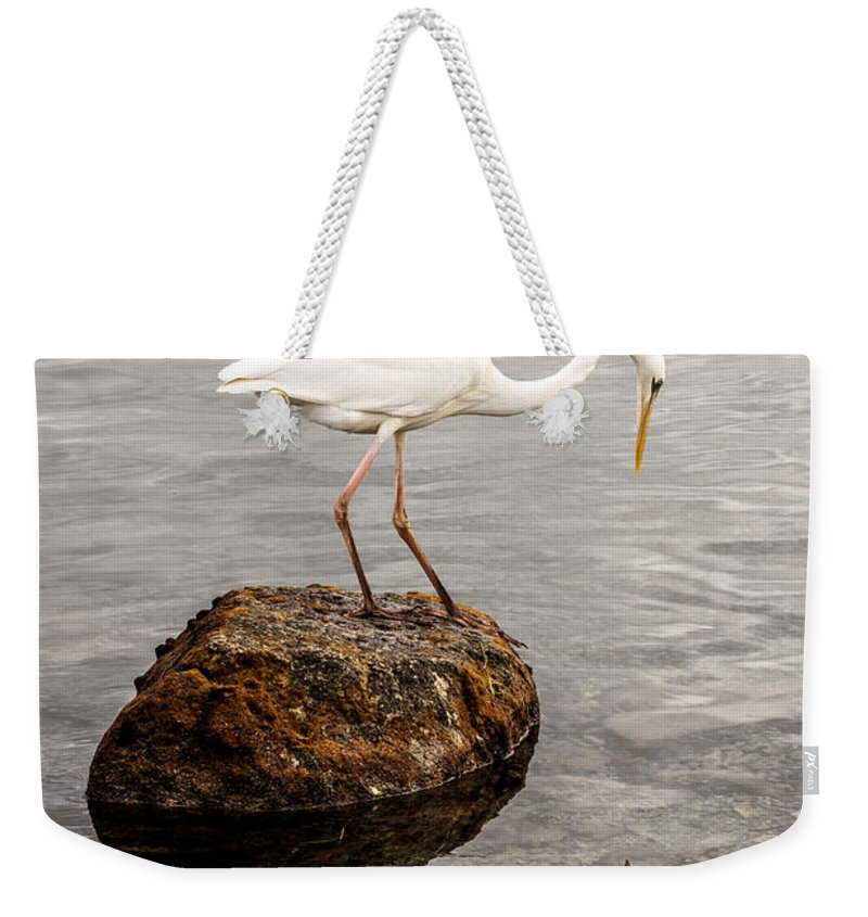 Great White Heron Weekender Tote Bag featuring the photograph Great White Heron by Elena Elisseeva