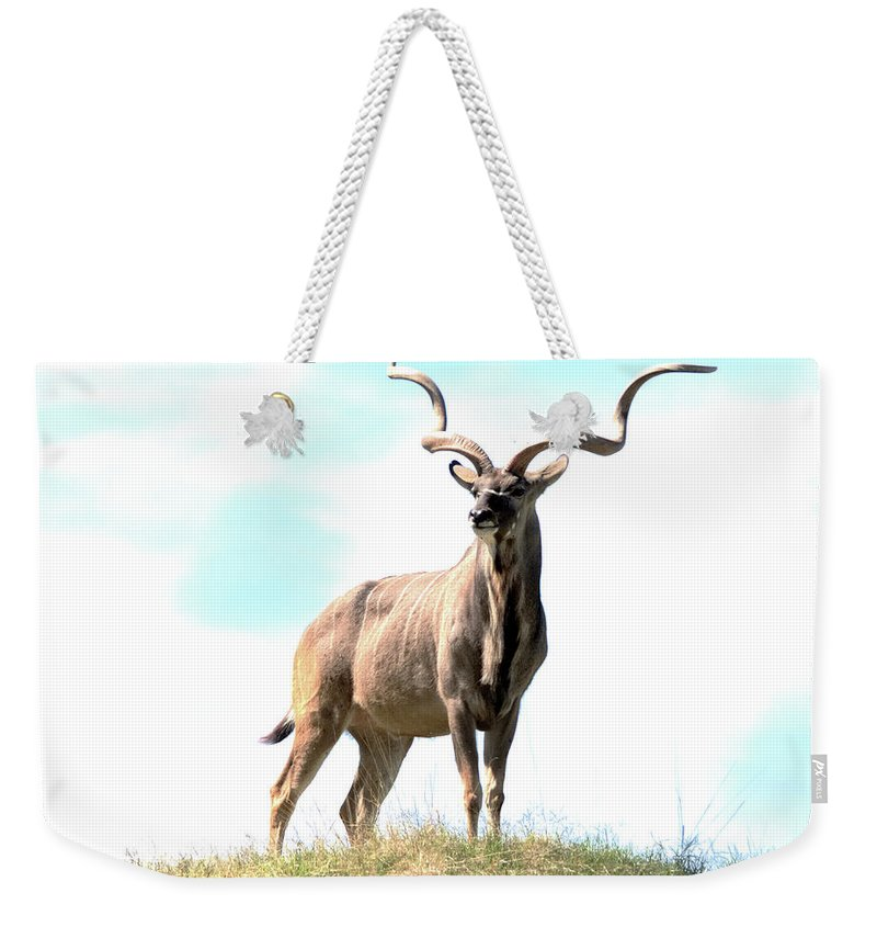 Kudu Weekender Tote Bag featuring the photograph Greater Kudu by Patricia Quandel