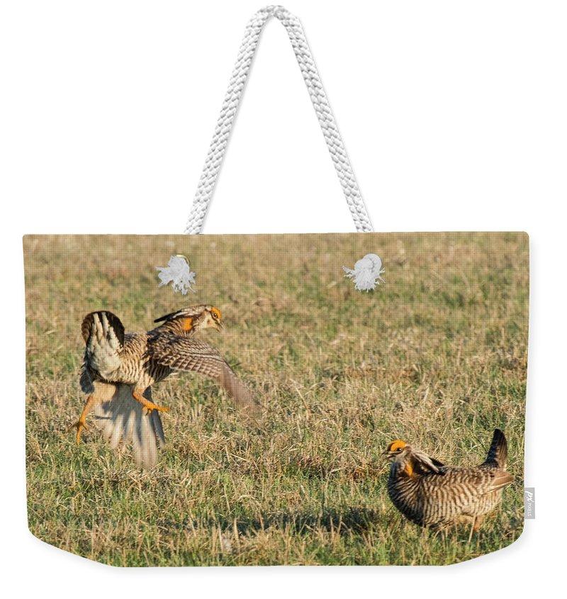 Greater Prairie Chicken Weekender Tote Bag featuring the photograph Greater Prairie Chicken Males 2 by David Drew