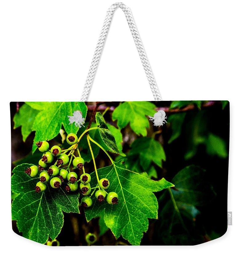 University Of Idaho Arboretum Weekender Tote Bag featuring the photograph Green Berries by Angus Hooper Iii