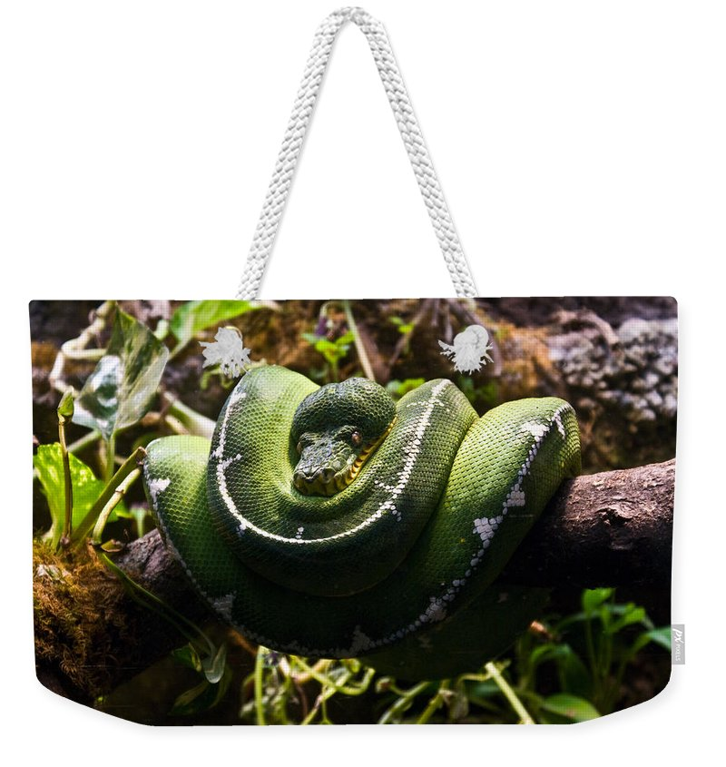 Green Weekender Tote Bag featuring the photograph Green Boa by Douglas Barnett