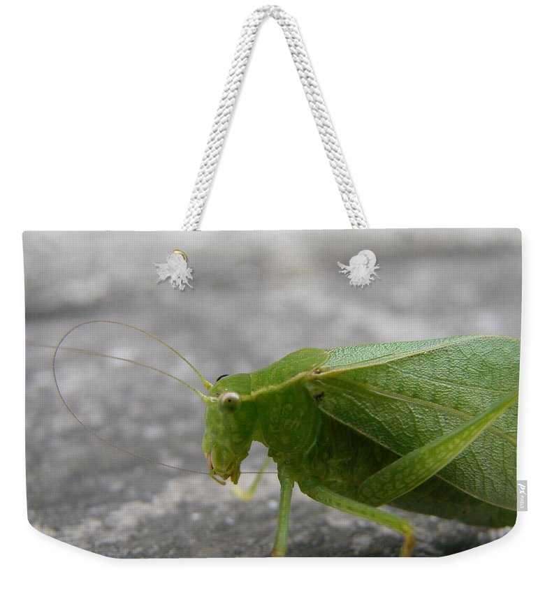 Bugs Weekender Tote Bag featuring the photograph Green Bug by Mary Halpin