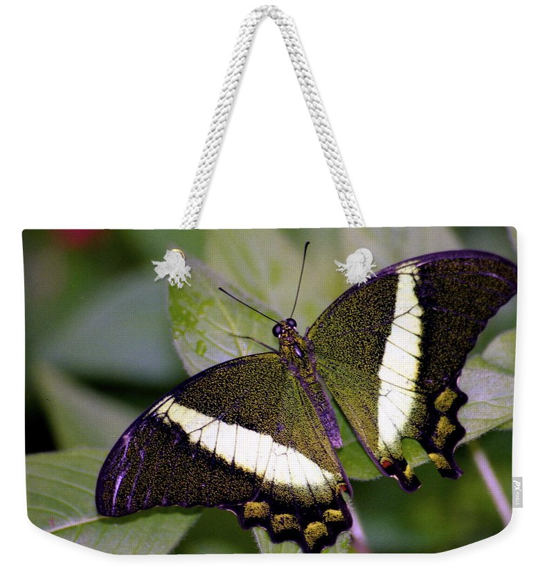 Butterfly Weekender Tote Bag featuring the photograph Green Butterfly by Michael Peychich