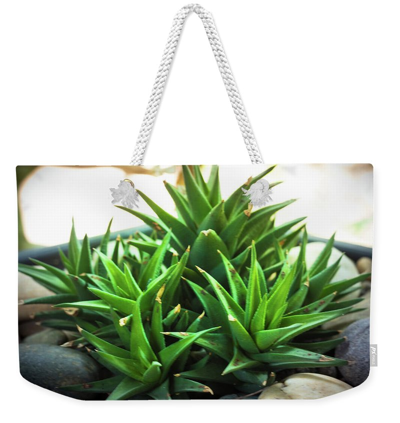 Green Weekender Tote Bag featuring the photograph Green Cactus by Sacksith Vorlachith