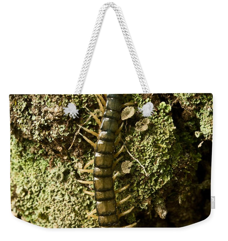 Centipede Weekender Tote Bag featuring the photograph Green Centipede by Douglas Barnett