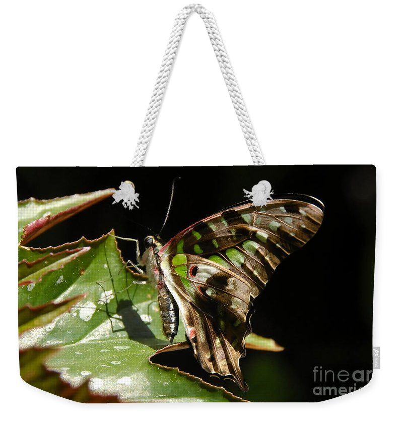 Butterfly Weekender Tote Bag featuring the photograph Green Checkered Skipper by David Lee Thompson