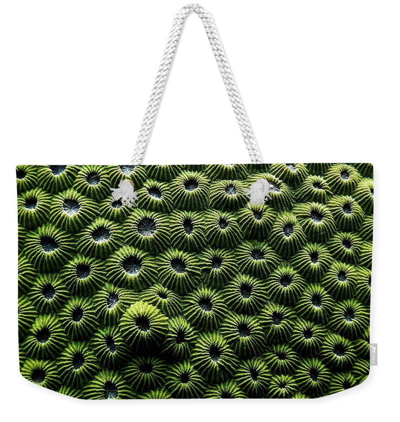 Coral Weekender Tote Bag featuring the photograph Green Coral by Dragica Micki Fortuna