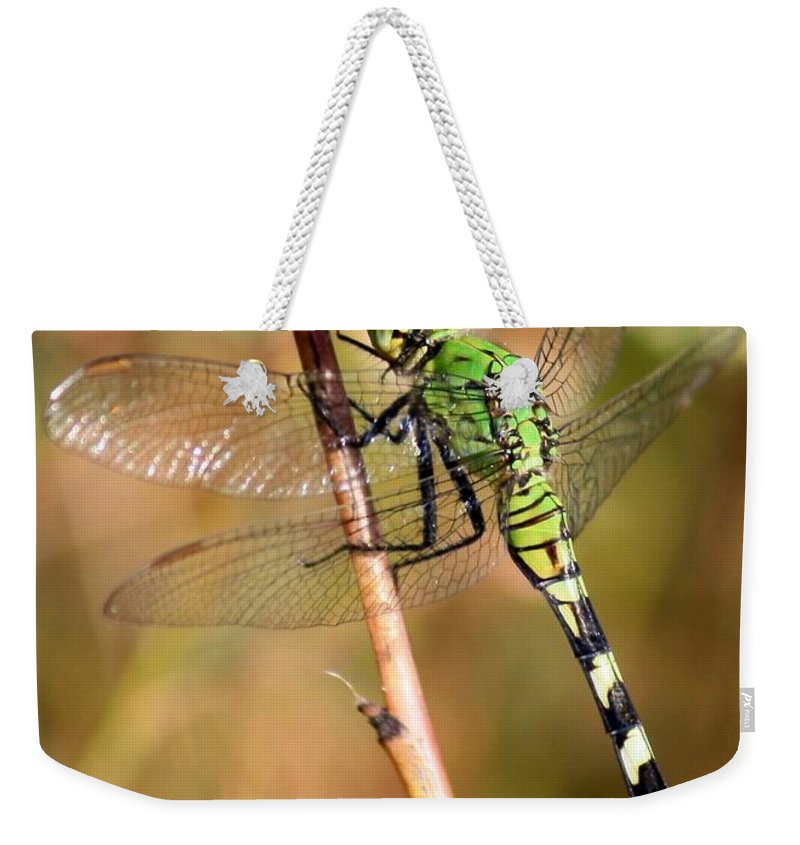 Dragonfly Weekender Tote Bag featuring the photograph Green Dragonfly Closeup by Carol Groenen