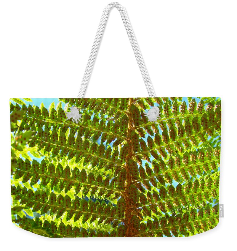 Fern Weekender Tote Bag featuring the photograph Green Forest Fern Leaves art prints Baslee Troutman by Patti Baslee