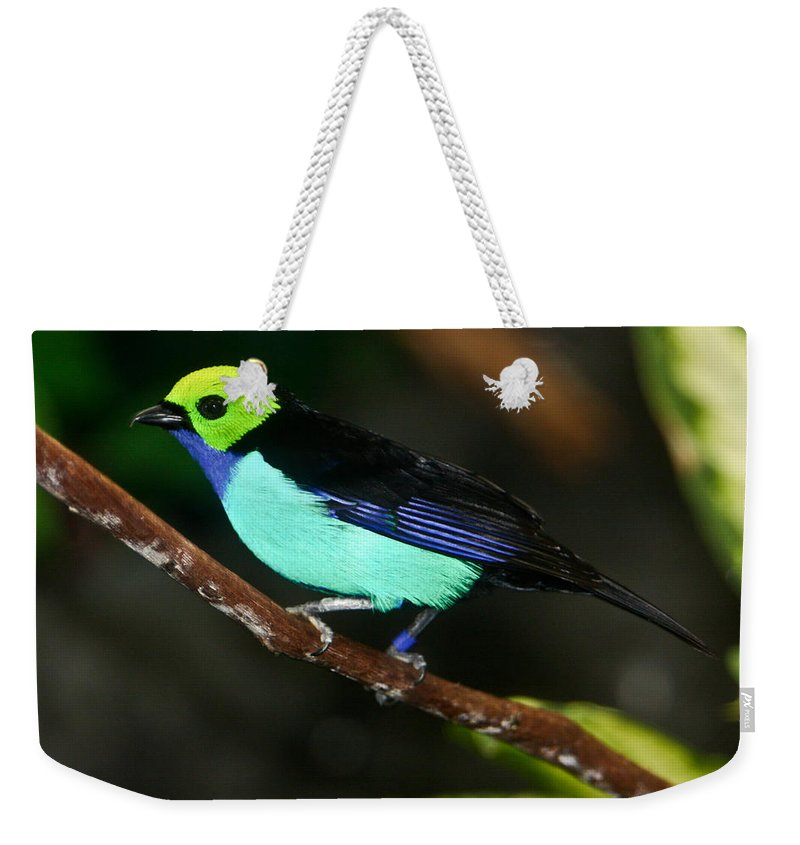 Green Weekender Tote Bag featuring the photograph Green Headed Bird On Branch by Douglas Barnett