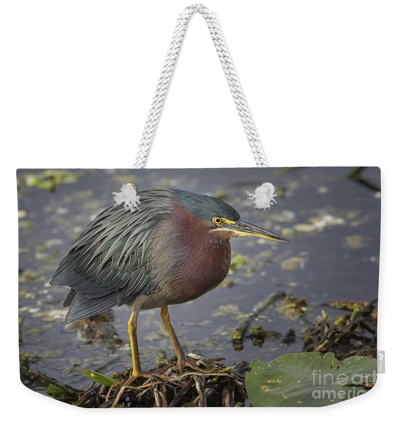 Green Heron Weekender Tote Bag featuring the photograph Green Heron 52 by Maria Struss