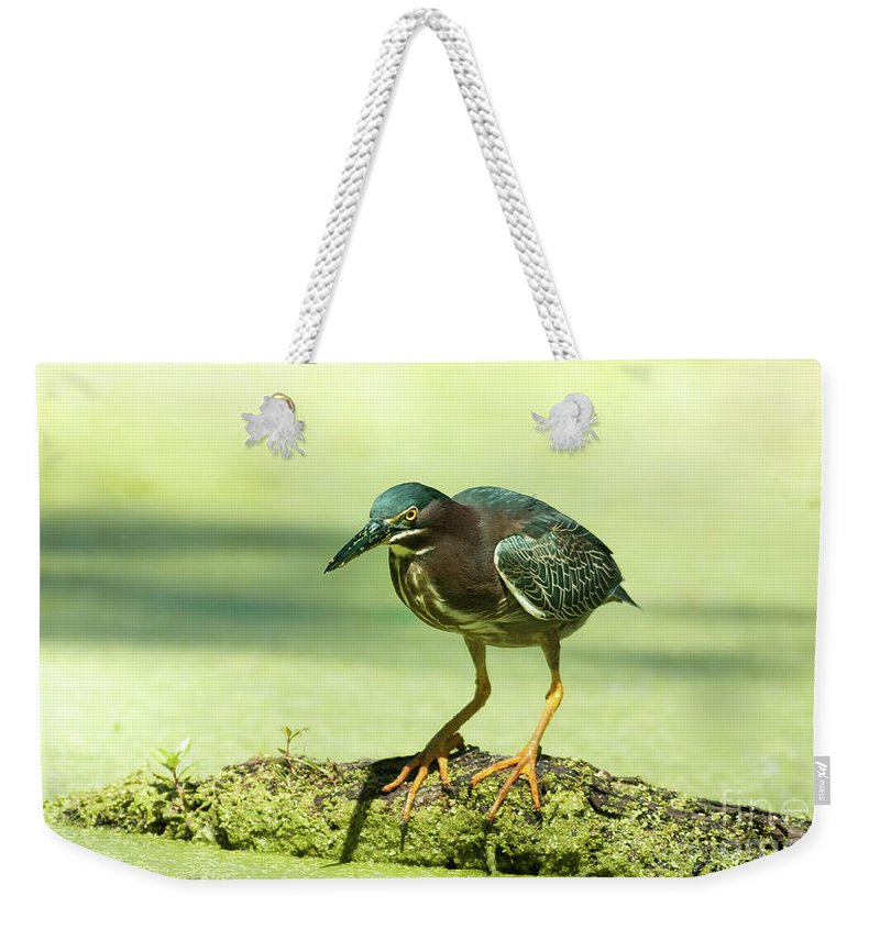 Animal Weekender Tote Bag featuring the photograph Green Heron In Green Algae by Robert Frederick