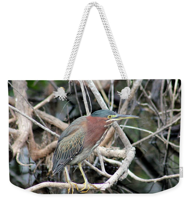 Everglades Weekender Tote Bag featuring the photograph Green Heron On A Branch by Mark Wells