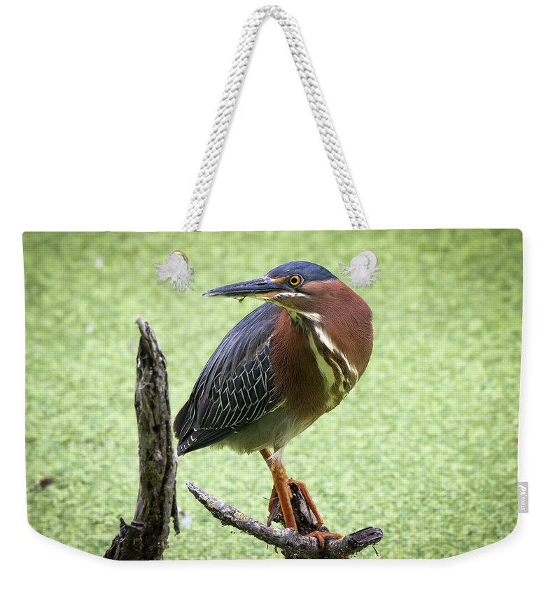 Green Weekender Tote Bag featuring the photograph Green Heron by Soroush Mostafanejad