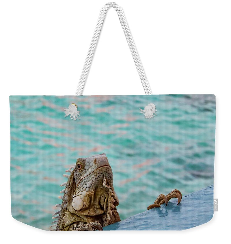 Bonaire Weekender Tote Bag featuring the photograph Green Iguana Peering Over Wall by Jean Noren