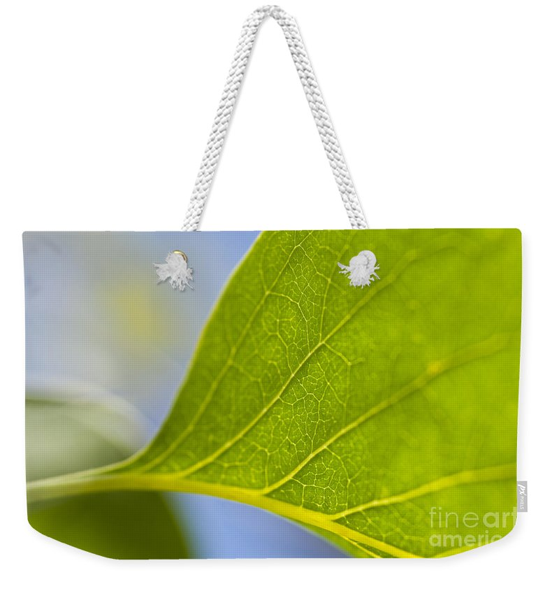 Pacific Northwest Weekender Tote Bag featuring the photograph Green Leaf Backlit by Jim Corwin
