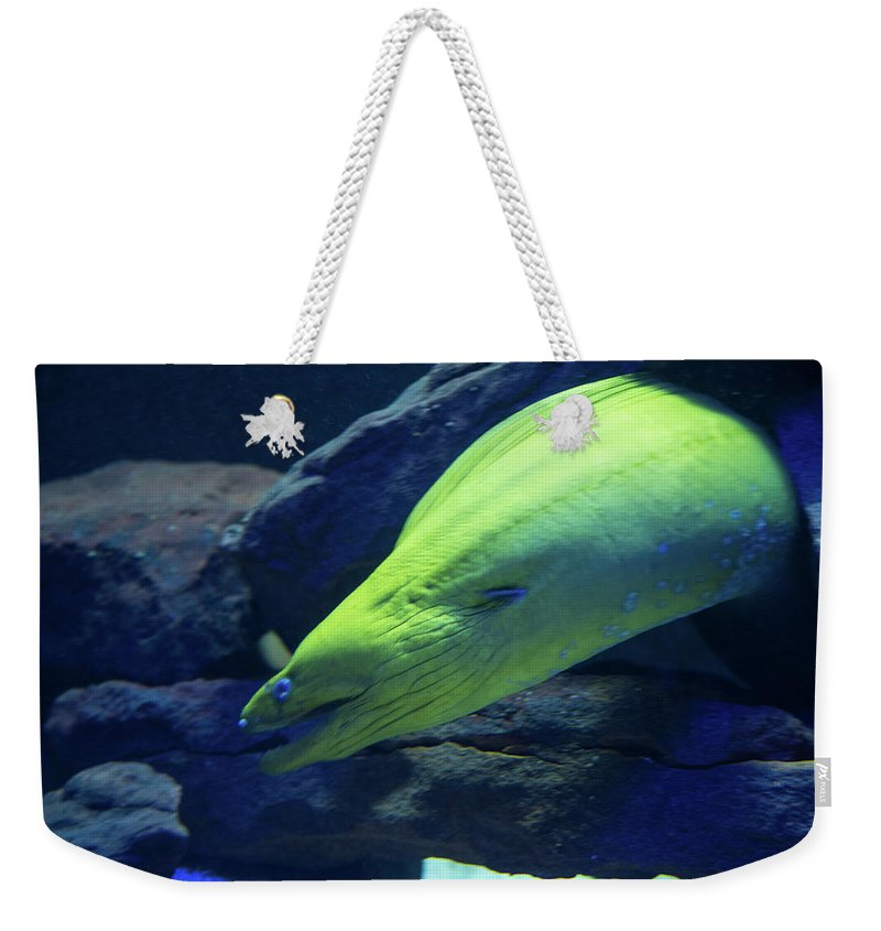 Green Moray Eel Weekender Tote Bag featuring the photograph Green Moray Eel by JG Thompson