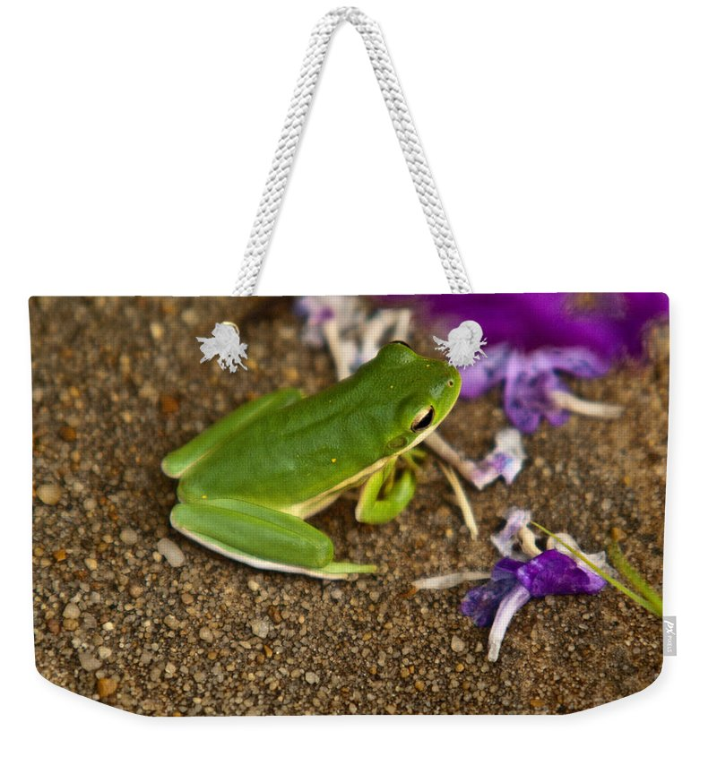 Cumberand Weekender Tote Bag featuring the photograph Green Tree Frog And Flowers by Douglas Barnett