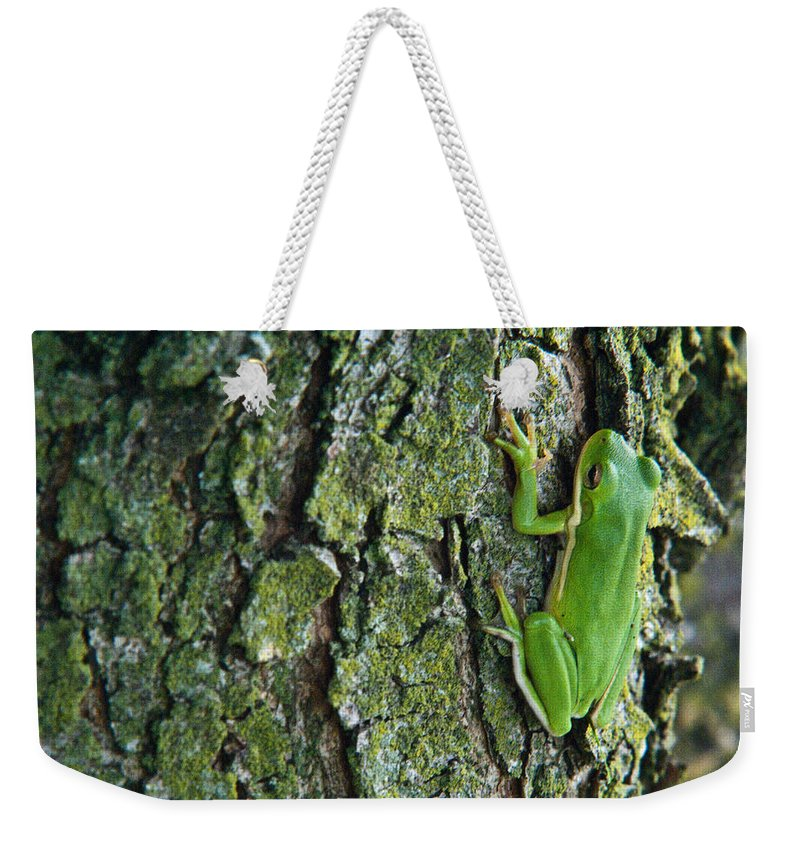 Cumberand Weekender Tote Bag featuring the photograph Green Tree Frog On Lichen Covered Bark by Douglas Barnett