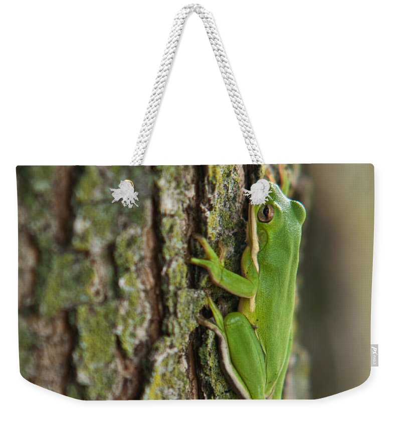 Green Weekender Tote Bag featuring the photograph Green Tree Frog Thinking by Douglas Barnett