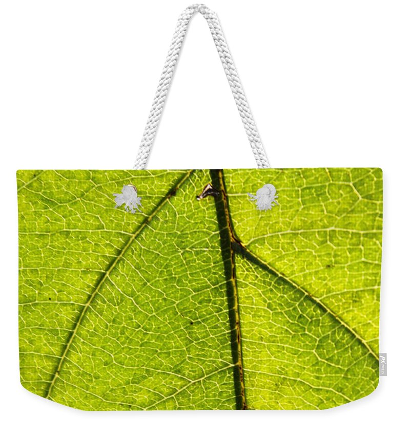 Fall Weekender Tote Bag featuring the photograph Green Veins by Lauri Novak