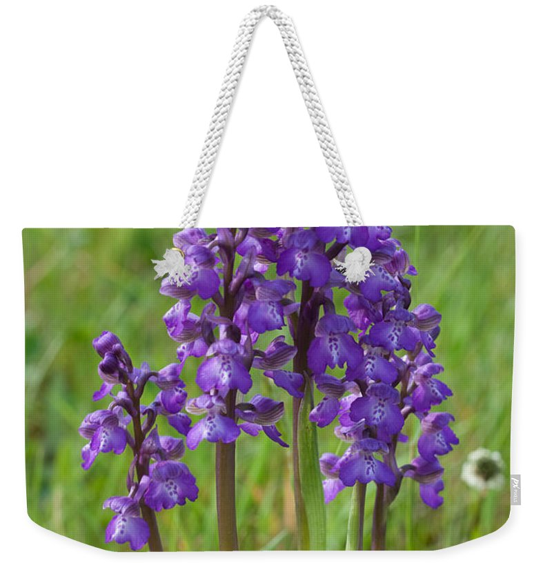Orchid.flower Weekender Tote Bag featuring the photograph Green-winged Orchids by Bob Kemp