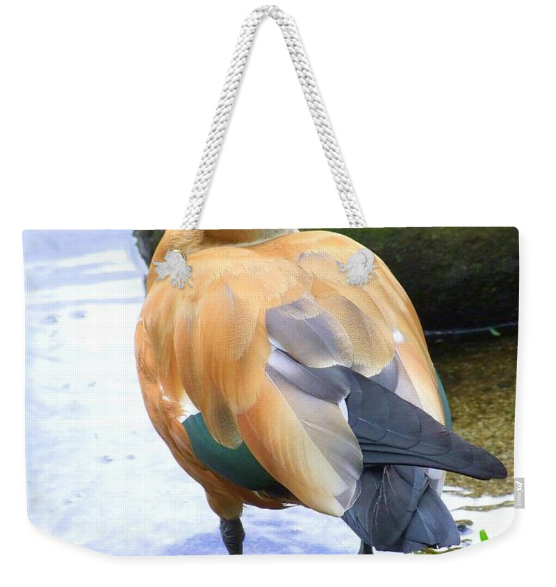 Brown Weekender Tote Bag featuring the photograph Green Winged Wood Duck 1 by Mary Deal