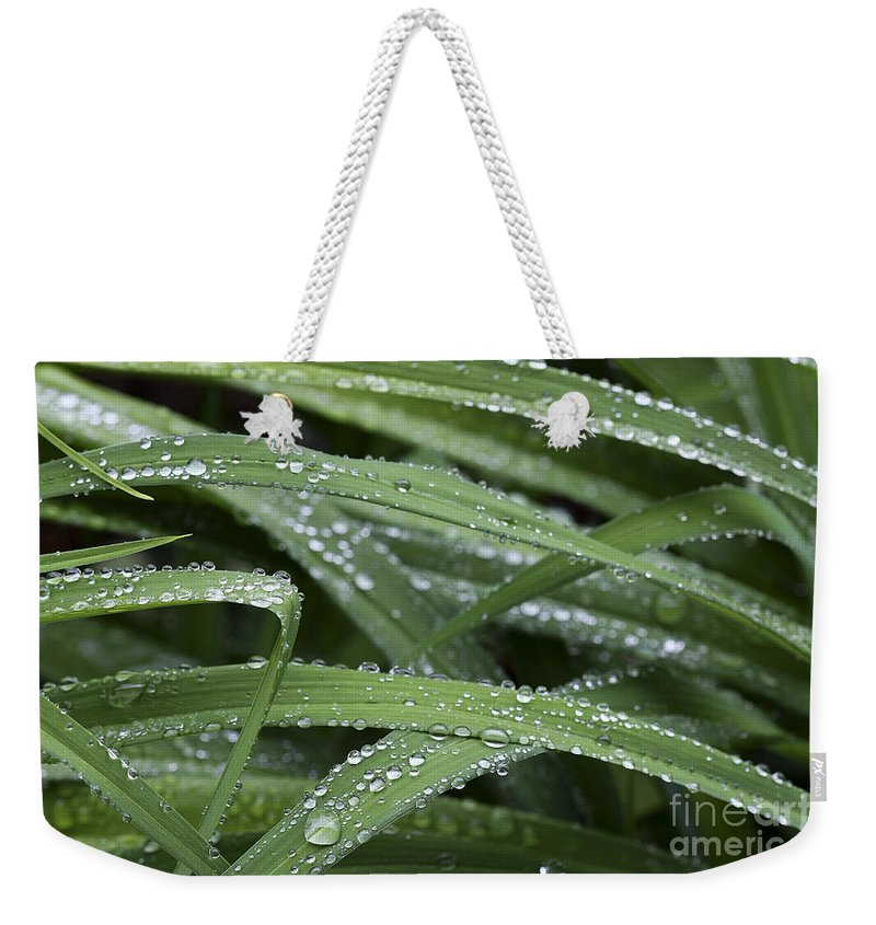 Nature Weekender Tote Bag featuring the photograph Green With Rain Drops by Deborah Benoit