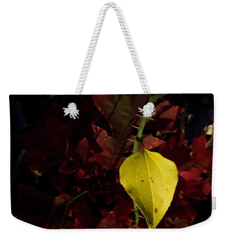 Greenbrier Weekender Tote Bag featuring the photograph Greenbriar Leaf In Evening Sun by Douglas Barnett