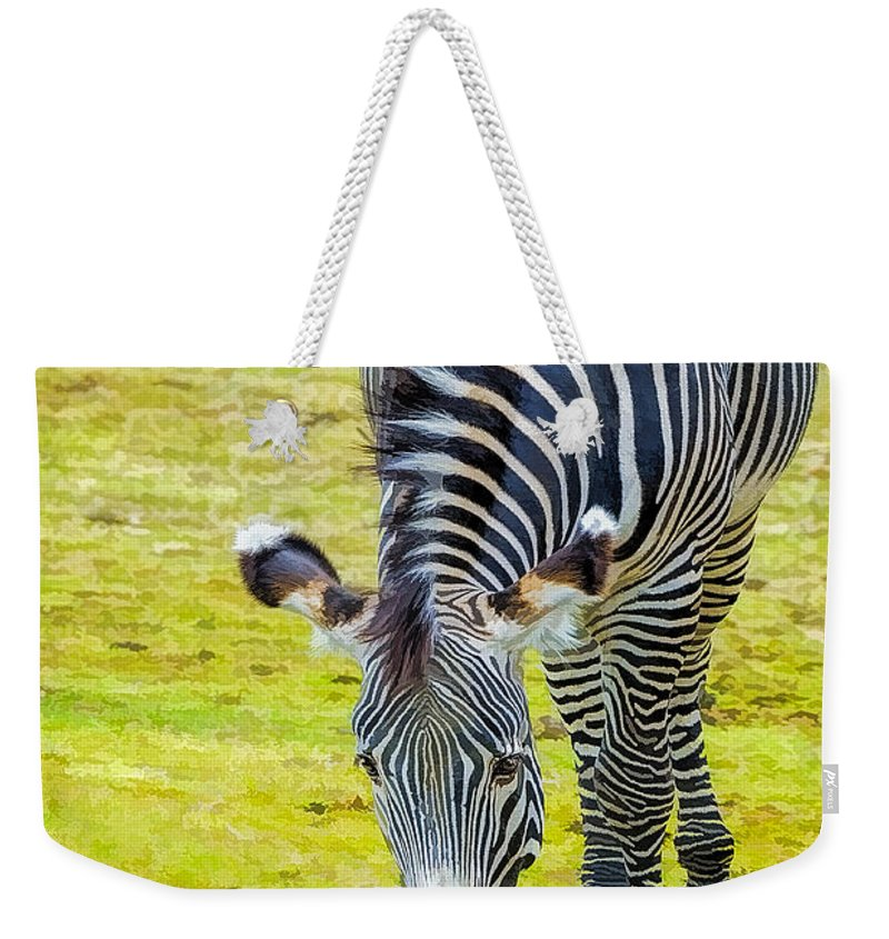 Grevys Zebra Weekender Tote Bag featuring the photograph Grevys Zebra Right by LeeAnn McLaneGoetz McLaneGoetzStudioLLCcom