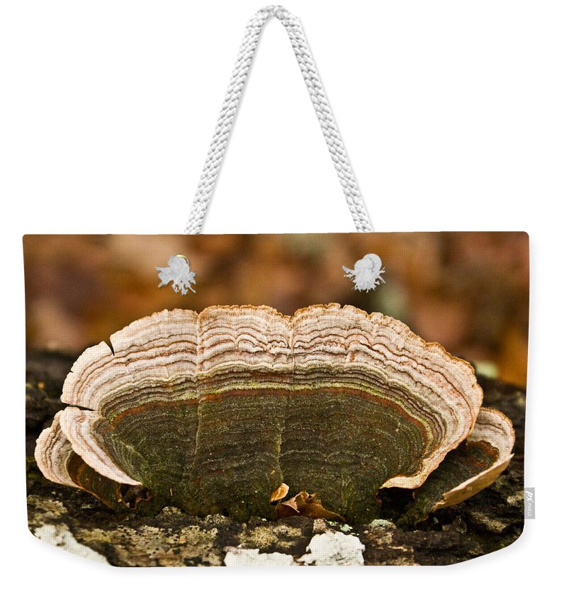 Grey Weekender Tote Bag featuring the photograph Grey Bracket Fungi by Douglas Barnett
