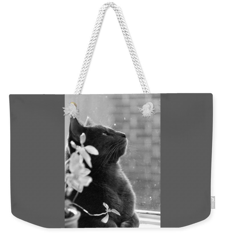 Black And White Weekender Tote Bag featuring the photograph Grey Cat, Looking Up by Katherine Nutt