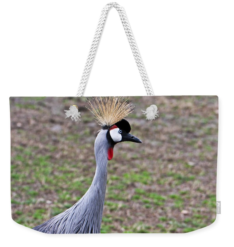 Grey Weekender Tote Bag featuring the photograph Grey Crowned Crain Of Africa 3 by Douglas Barnett