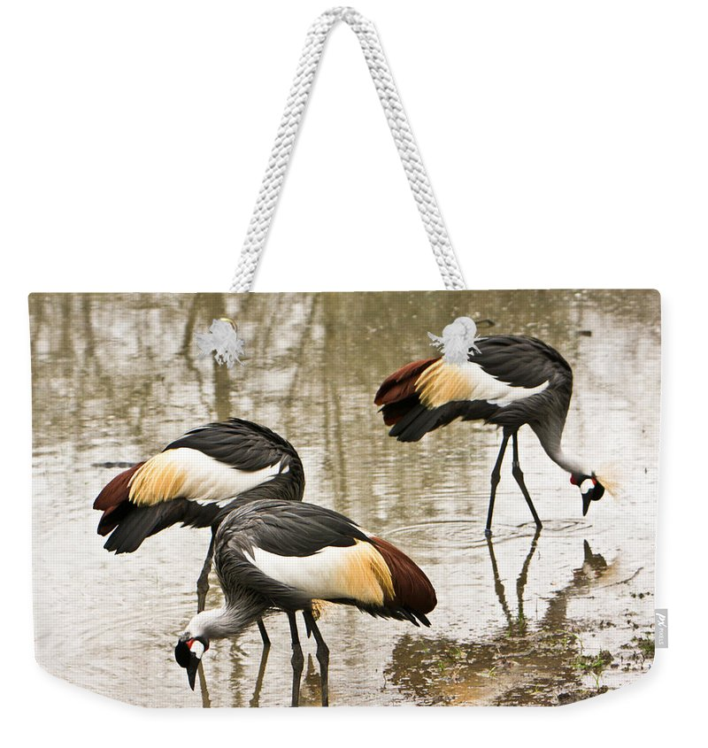 Grey Weekender Tote Bag featuring the photograph Grey Crowned Crain Of Africa 5 by Douglas Barnett