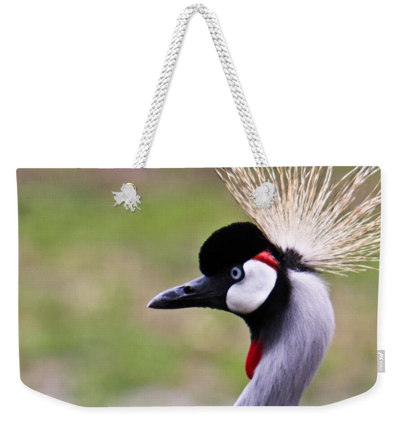 Grey Weekender Tote Bag featuring the photograph Grey Crowned Crain Of Africa by Douglas Barnett