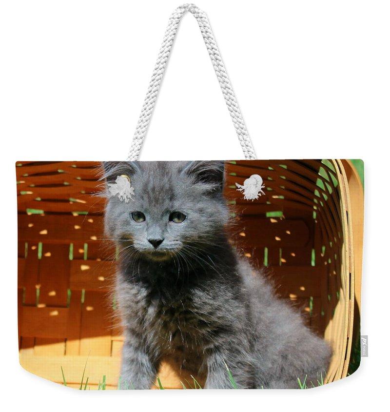 Kitten Weekender Tote Bag featuring the photograph Grey Fluffy Kitten by Anita Hiltz
