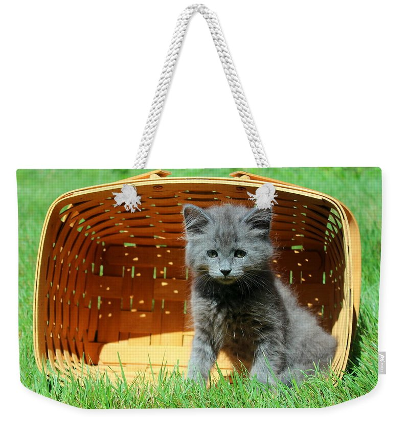 Kitten Weekender Tote Bag featuring the photograph Grey Fluffy Kitten In Market Basket by Anita Hiltz
