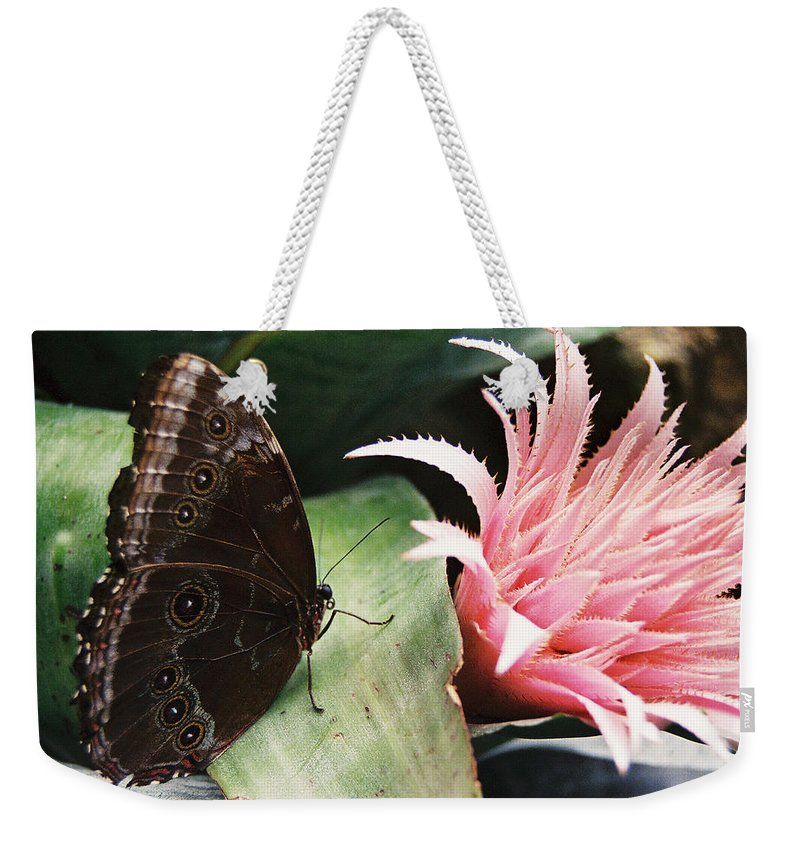 Butterfly Weekender Tote Bag featuring the photograph Grey Pansy Pink Bromeliad by Ric Bascobert