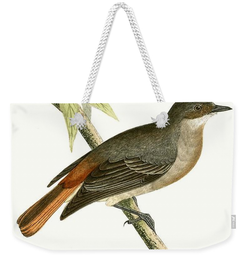 Bird Weekender Tote Bag featuring the painting Grey Redstart by English School