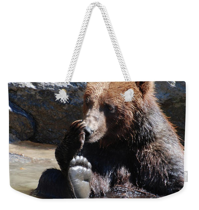 Grizzly Weekender Tote Bag featuring the photograph Grizzly Bear Licking His Paw While Seated In A Muddy River by DejaVu Designs