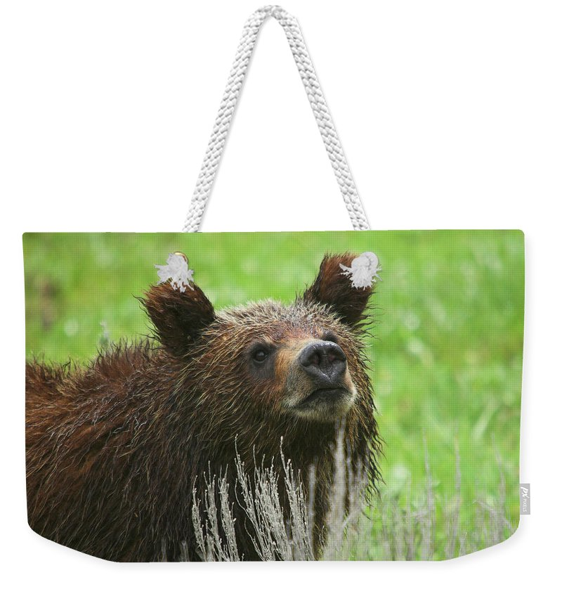 Grizzly Weekender Tote Bag featuring the photograph Grizzly Cub by Steve Stuller