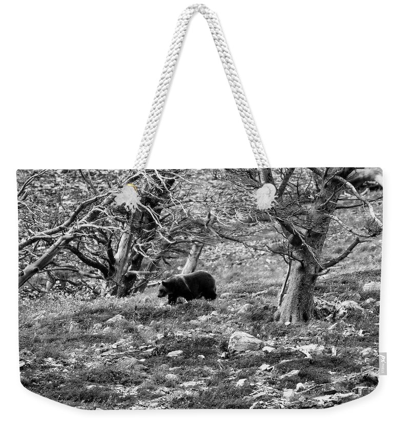 Glacier National Park Weekender Tote Bag featuring the photograph Grizzly Walking Through Dead Trees - Black And White by Mark Kiver