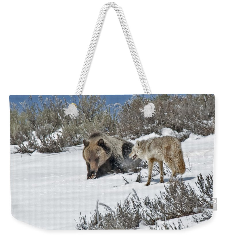 Grizzly Weekender Tote Bag featuring the photograph Grizzly With Coyote by Gary Beeler