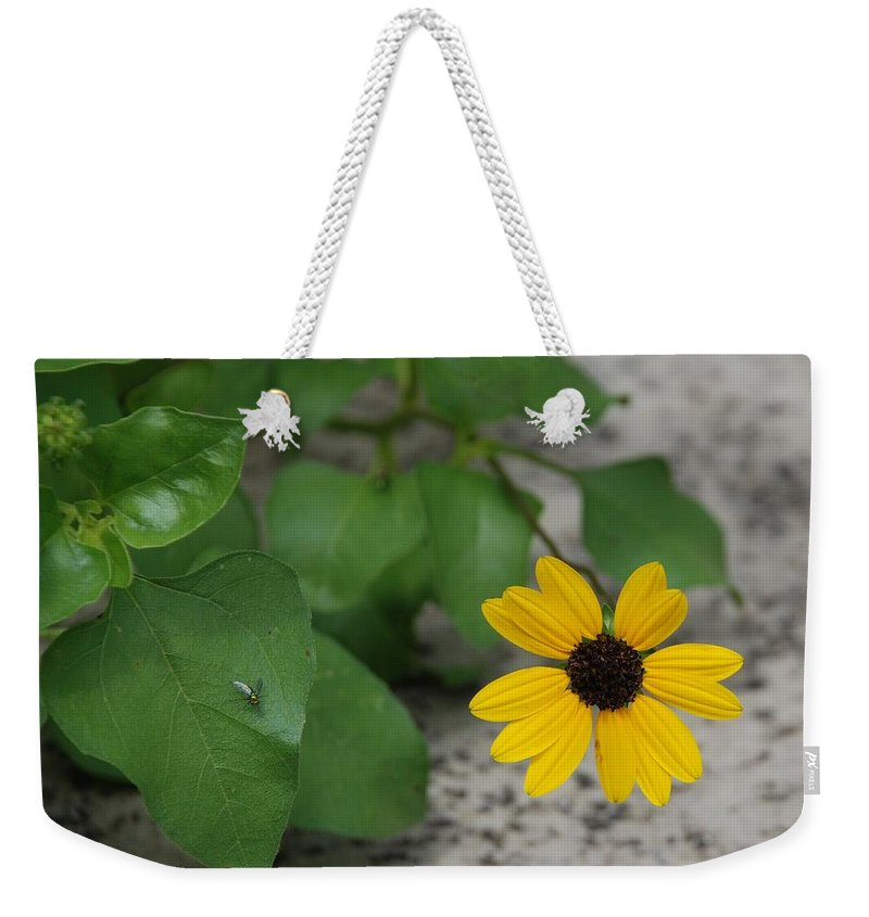 Macro Weekender Tote Bag featuring the photograph Grounded Sunflower by Rob Hans