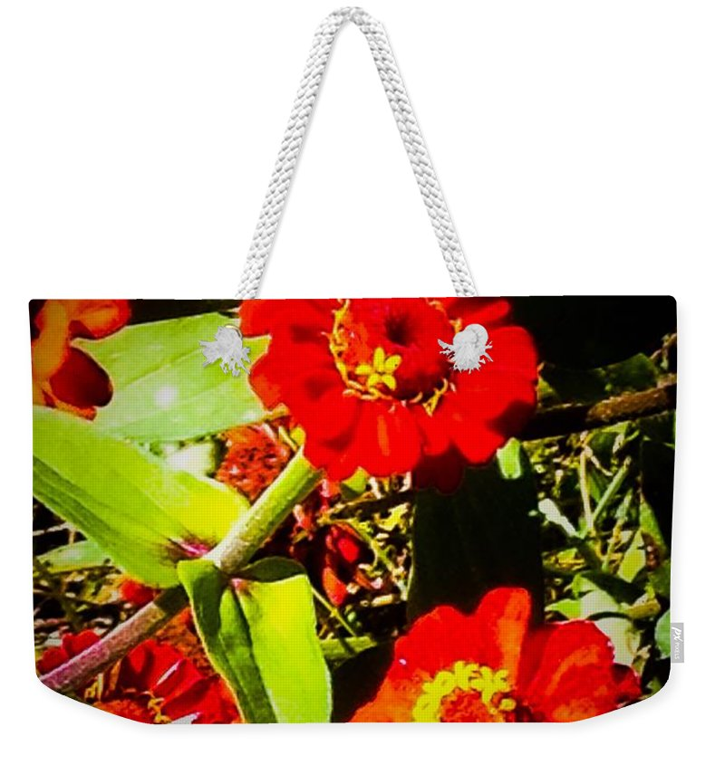 Flowers Weekender Tote Bag featuring the photograph Group Of Small Red Zinnia's by Debra Lynch