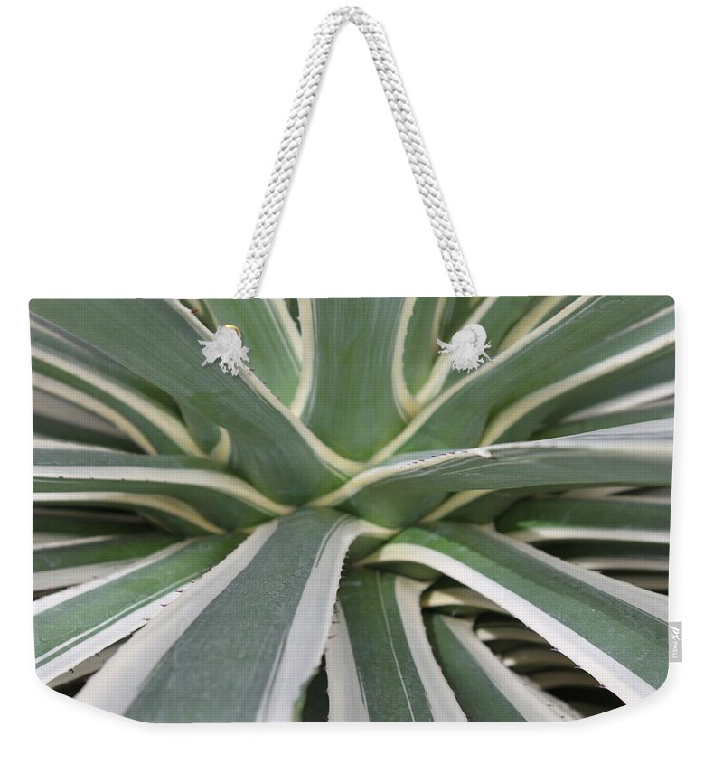 Nature Weekender Tote Bag featuring the photograph Growth by Munir Alawi
