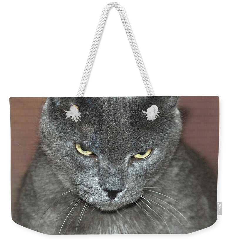 Cat Weekender Tote Bag featuring the photograph Grumpy Cat by Richard Bryce and Family