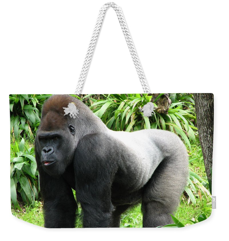Gorilla Weekender Tote Bag featuring the photograph Grumpy Gorilla II by Stacey May