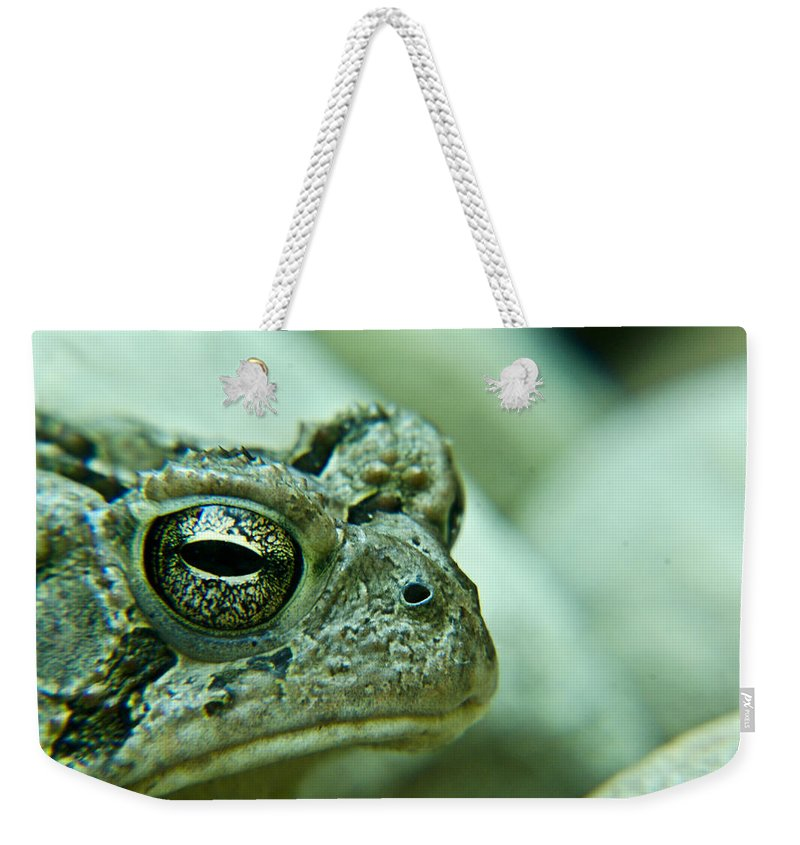 Toad Weekender Tote Bag featuring the photograph Grumpy Toad by Douglas Barnett